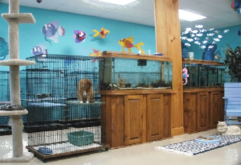 Cat boarding is a vacation for your feline family members in PCI's Cattery.