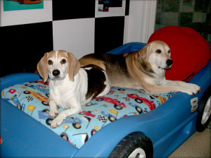 Dogs on the Race Car Bed, luxurious dog boarding studio